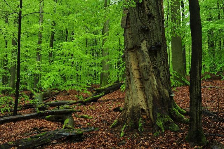 Trittstein_Kleinengelein_Steigerwald-Zentrum_Nachhaltigkeitszentrum_Waldnaturschutz