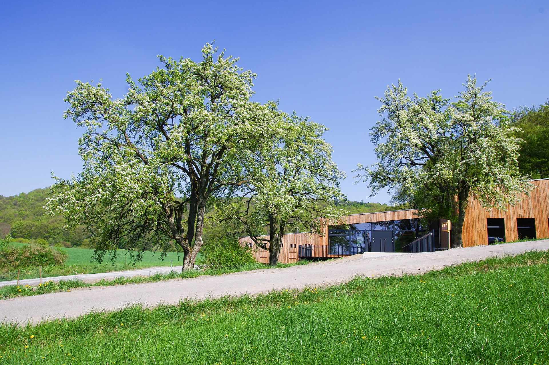 Slider_Steigerwald-Zentrum_Nachhaltigkeit-erleben_Frühling-blühende-Birnbäume