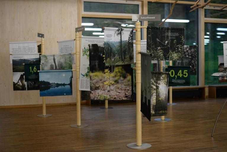 Wechselausstellung-Bäume_Forstbetrieb_Ebrach_Handthal-Steigerwald-Zentrum