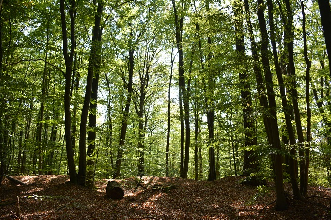 Waldbaden – Sommerfrische (18. Juli)